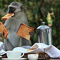 Toast Monkey by Leigh Lofgren