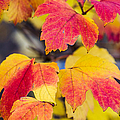 Toasted Autumn - Featured 3 by Alexander Senin