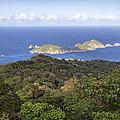 Tobago Rainforest by Hugh Stickney