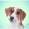 Toffee - A Former Shelter Sweetie by Dave Anderson
