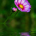 Together...always Reflection by Steve Harrington