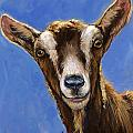 Toggenburg Goat On Blue by Dottie Dracos
