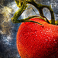 Tomato On A Vine by Bob Orsillo
