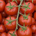 Tomato On The Vine by Lee Avison