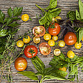 Tomatoes And Herbs by Elena Elisseeva