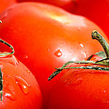 Tomatoes. by Gary Gillette