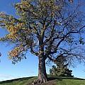 Tom's Tree by Joseph Yarbrough