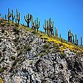 Tonto Ridge 16112 2 by Jerry Sodorff