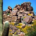Tonto Saguaro Rocks 10189 by Jerry Sodorff