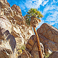 Top Of A Palm Near Top Of Andreas Canyon-ca by Ruth Hager