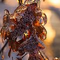 Toronto Ice Storm 2013 - Oak Leaves Jewelry by Georgia Mizuleva