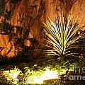 Torquay Illuminated Gardens Landscape by Terri Waters
