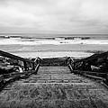 Torrey Pines Stairs by Tanya Harrison