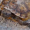 Tortoise By Nature by Patricia Twardzik