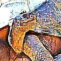 Tortoise Gouache by Alice Gipson