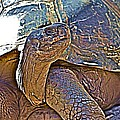 Tortoise One by Alice Gipson