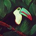 Toucan by Anastasiya Malakhova