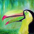 Toucan Land by Raphael De Selva