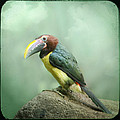 Toucan Perched On A Rock - Exotic Bird by Gary Heller