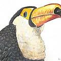 Toucan by Richard Goohs