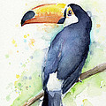 Toucan Watercolor by Olga Shvartsur