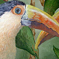 Toucans by Mary Zins