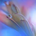 Touch Me Softly... by Juliana Nan