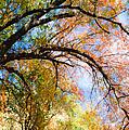 Touch Of Fall by Tamara Becker