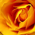 Touch Of Hope by Rhonda Barrett
