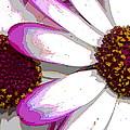 Touch Of Pink Osteospermum Trio B by Nicki Bennett