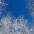 Touching The Winter Sky by Ben and Rachel Melton