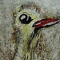 Tough Ol Bird by Dotti Hannum