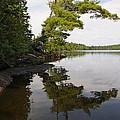 Tough Old Pine by Sandra Updyke