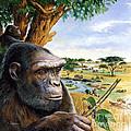 Toumai Sahelanthropus Tchadensis by Publiphoto