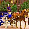 Touring The Old City Blue Carriage Ride Along Place D'armes Vieux Port Caleche Quebec Art C Spandau by Carole Spandau