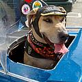 Tourist Dog 2 by Karen Zuk Rosenblatt
