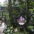 Tourist Doing Photography And Viewing Plants In A Garden by Ashish Agarwal