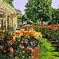 Tournament Of Roses II by David Lloyd Glover