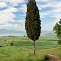 Track, San Quirico D'orcia, Val by Peter Adams