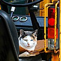 Tractor Cat by Diana Angstadt