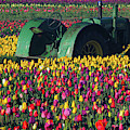 Tractor In The Tulip Field, Tulip by Michel Hersen