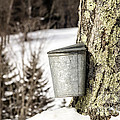 Traditional Sap Bucket On Maple Tree In Vermont by Edward Fielding