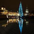 Trafalgar Christmas Tree by Dawn OConnor