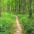 Trail by Alexey Stiop