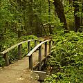 Trail Bridge Toketee 1 by John Brueske