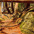Trail In A Forest, Muskoka, Ontario by Panoramic Images