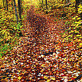 Trail In Fall Forest by Elena Elisseeva