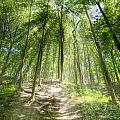 Trail In The Forest by Alexey Stiop