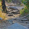 Trail by Shawn Dennstedt