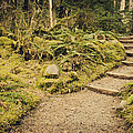Trail Through The Moss by Heather Applegate